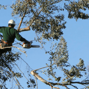 Reasons Why You May Need To Hire Tree Removal Services