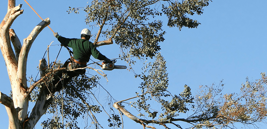 tree-services-trimming-featimg-e1429836040897